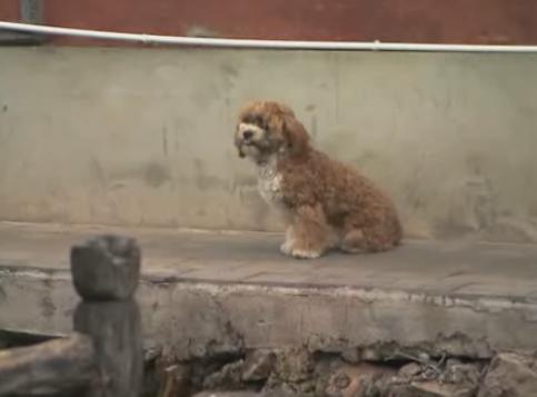 lijiang dog 2