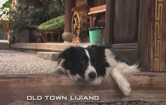 lijiang dog