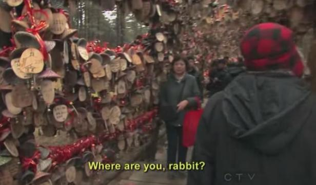 lijiang zev rabbit