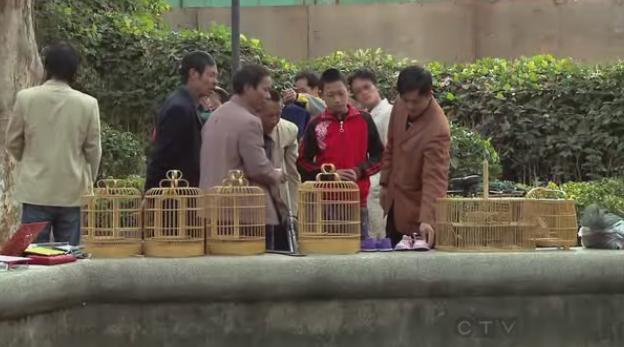 kunming again cage