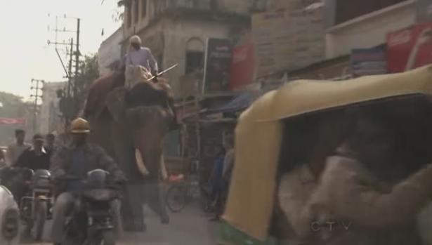 varanasi elephant