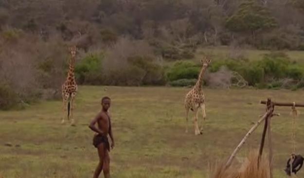 port-elizabeth-giraffe-1