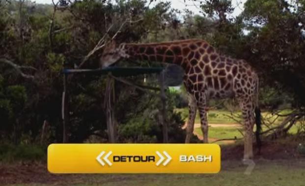 port-elizabeth-giraffe