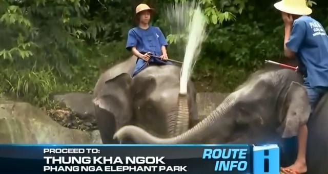 phuket elephant.png