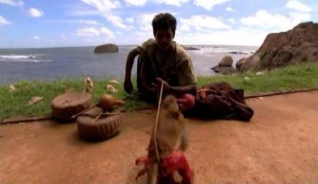 colombo monkey 3