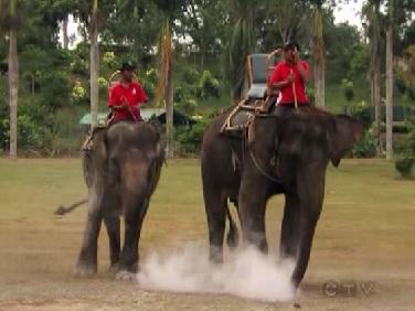 java elephants