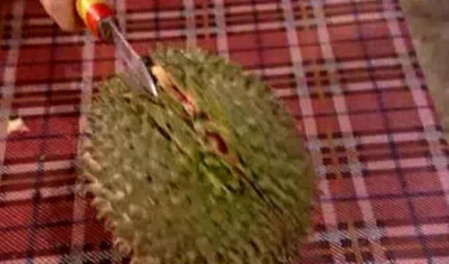 perth durian 1
