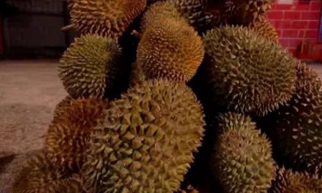 perth durian