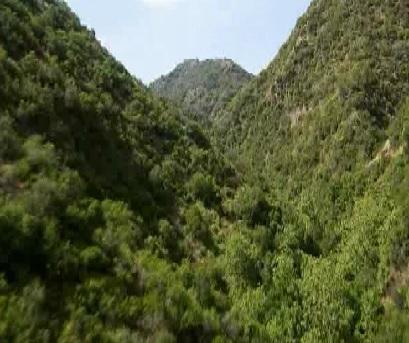 taipei trees