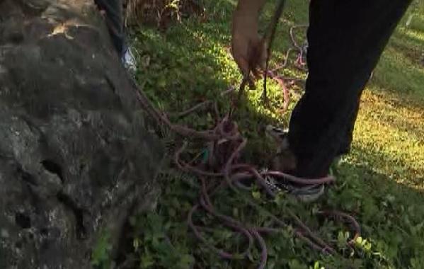 yogyakarta rope