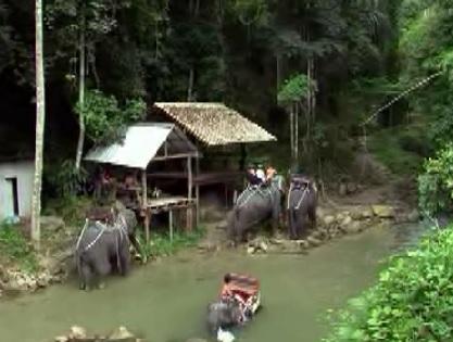 bangkok andy tommy 9