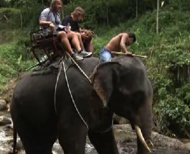 bangkok elephant 11