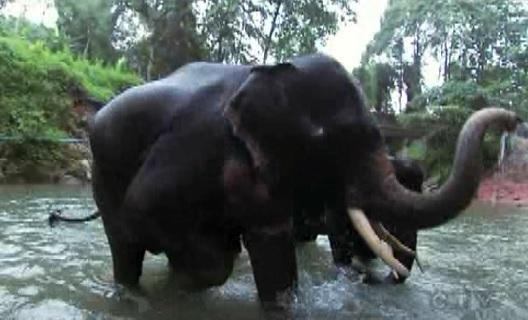 bangkok elephant 3