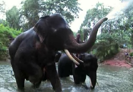 bangkok elephant 4