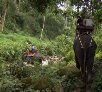 bangkok elephant 9