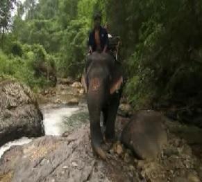 bangkok elephant