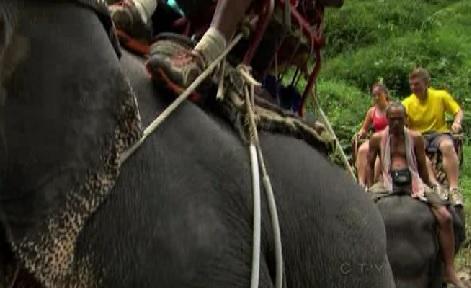 bangkok elephants 1