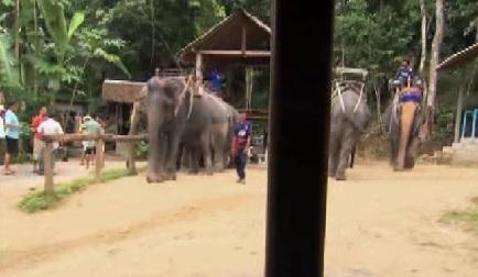 bangkok elephants 2