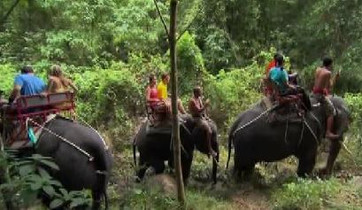bangkok elephants
