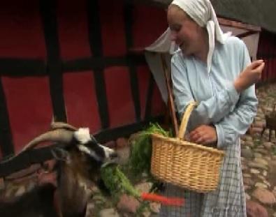 copenhagen goat 1