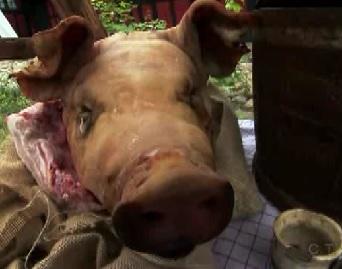 copenhagen pig 1
