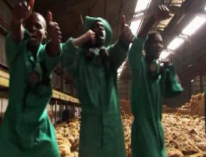 lilongwe workers