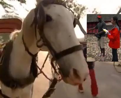 marcus pollard horse