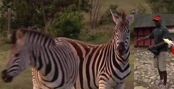 marcus pollard zebra