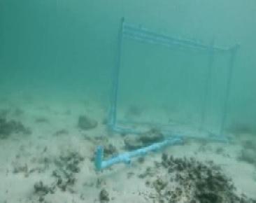 phuket cage 1