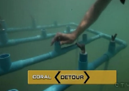 phuket coral 1