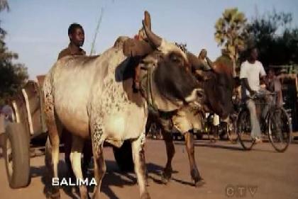 salima animals