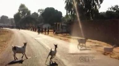 salima goats