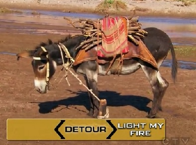 salta donkey