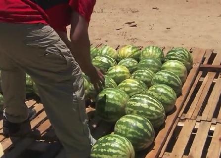 asuncion melons 3