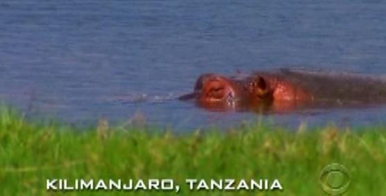 kilimanjaro hippo