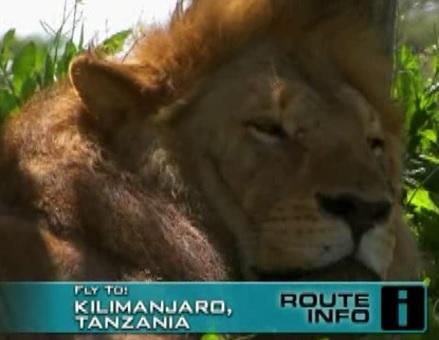 kilimanjaro lion