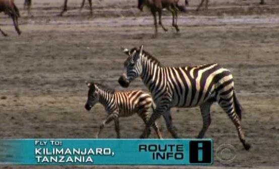 kilimanjaro zebra