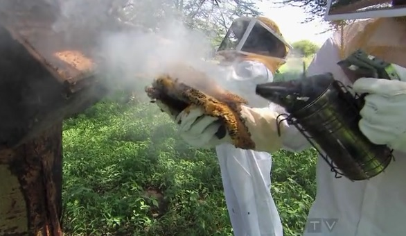 karatu honeycomb