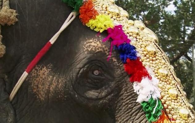 chandiroor elephant 2